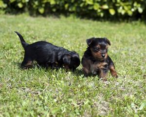 Puppies 5