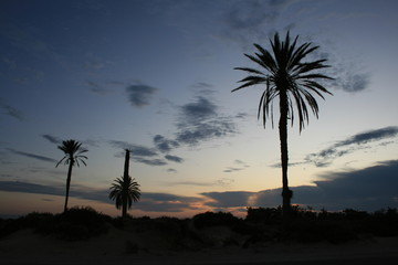 Silhouettes of palm trees against a beautiful sunset.