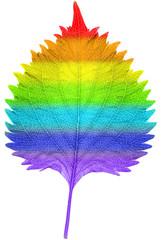 虹色のしその葉