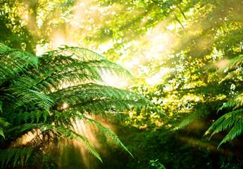 Morning sun in a misty rainforest