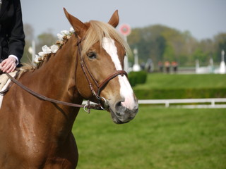 cheval et cavaliere