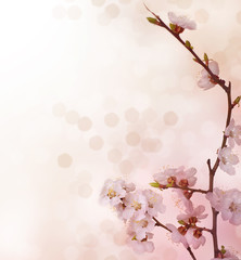 Fototapete - Spring Blossoms border