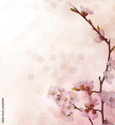 Wall mural Spring Blossoms border