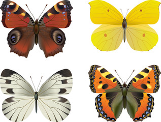 Set of  vector realistic butterfly