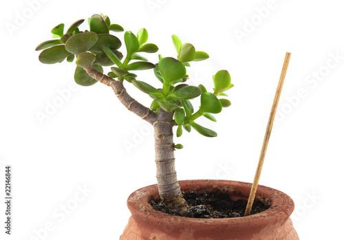 Plante grasse photo libre de droits sur la banque d for Plantes acheter ligne
