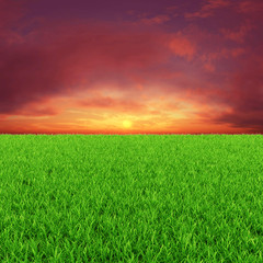 Sunny background with green grass and red sky