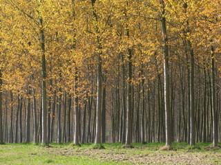 alberi 248