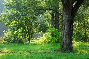 alberi 415