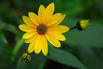 fiori 118