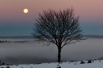 Winterbaum mit Mond