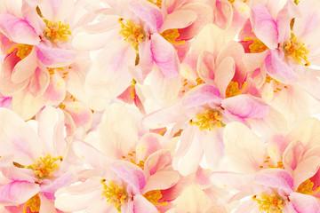 Textur Apfelblüte