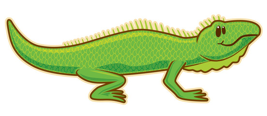 Iguana. Vector without gradients