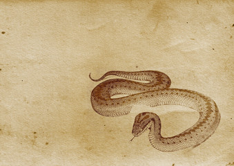 Snake (Illustration from late 1800)