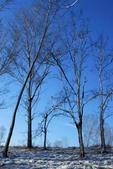 alberi 583