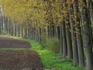 alberi 639