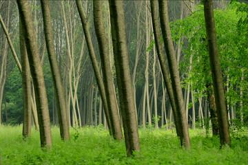 alberi 728