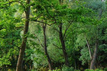 alberi 739