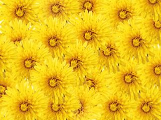 background of yellow dandelions