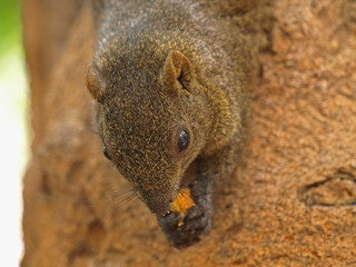 Closeup Picture of Squirrel's Head