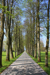 avenue planted with trees on both sides on spring