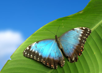 Blue exotic butterfly