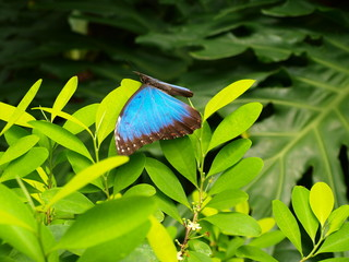 Exotic butterfly on green leaves