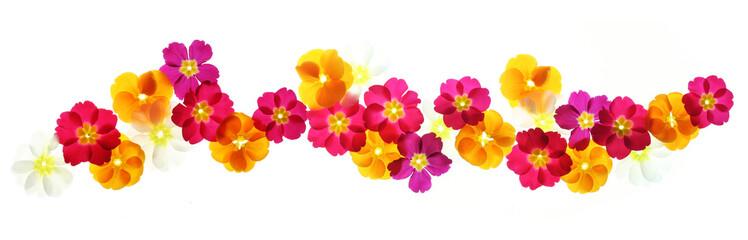 Papiers peints Fleuriste Summer flowers border
