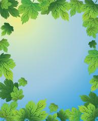 Plants frame