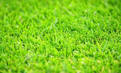 Grüner Fußball Rasen - Green Soccer Grass