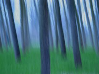 alberi 276