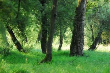 alberi 419