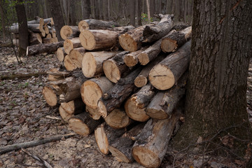 The logs combined in the big heaps at deforestation