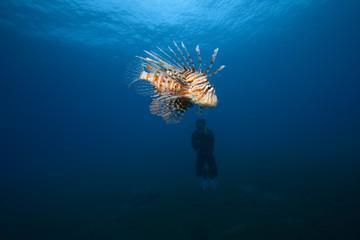 Lionfish and Scuba Diver