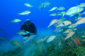 Scuba Diver swims through Shoal of Goatfish