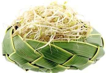 soja germé, haricot mungo sur vannerie palmier, fond blanc