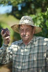 Senior vintner examining grapes