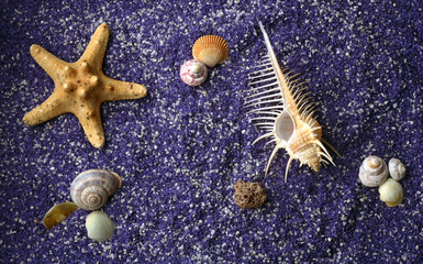 sea shell and starfishes on lilac sand