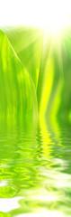 beautyful green leaves