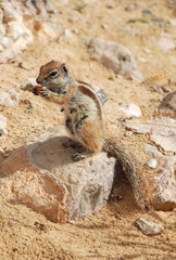 Sitting chipmunk