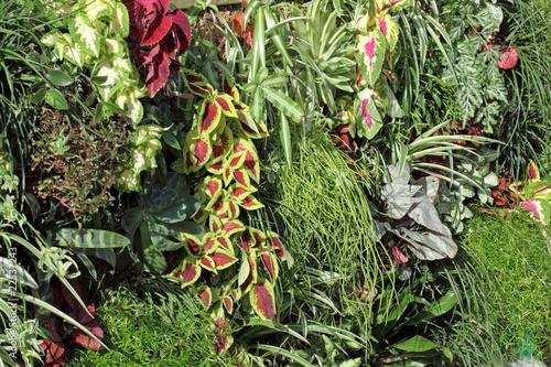 mur v g tal finalis avec des plantes rampantes et couvrantes photo libre de droits sur la. Black Bedroom Furniture Sets. Home Design Ideas