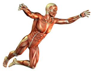Wall Mural - Muskelstudie Mann springend