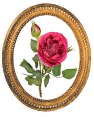 rose rouge dans un cadreoval doré
