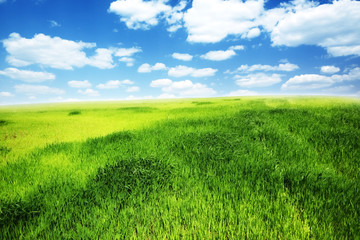 Spring day... field of green grass and cloudy sky
