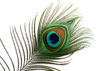 Papiers peints Paon plume de paon