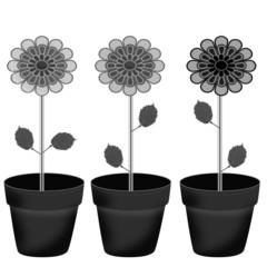 Plants in flower pot