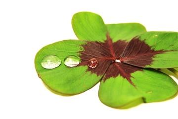 Kleeblatt mit vier Blätter