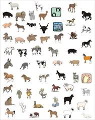 coleccione de animales