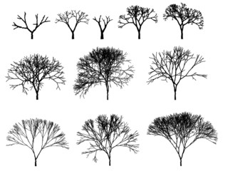 tree silhouette outline