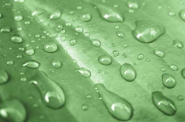 Gouttes d'eau sur feuille