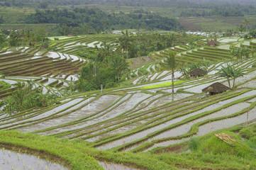 reisterrassen in indonesien bali